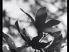 Screen-Shot-2020-11-18-at-1.29.03-PM